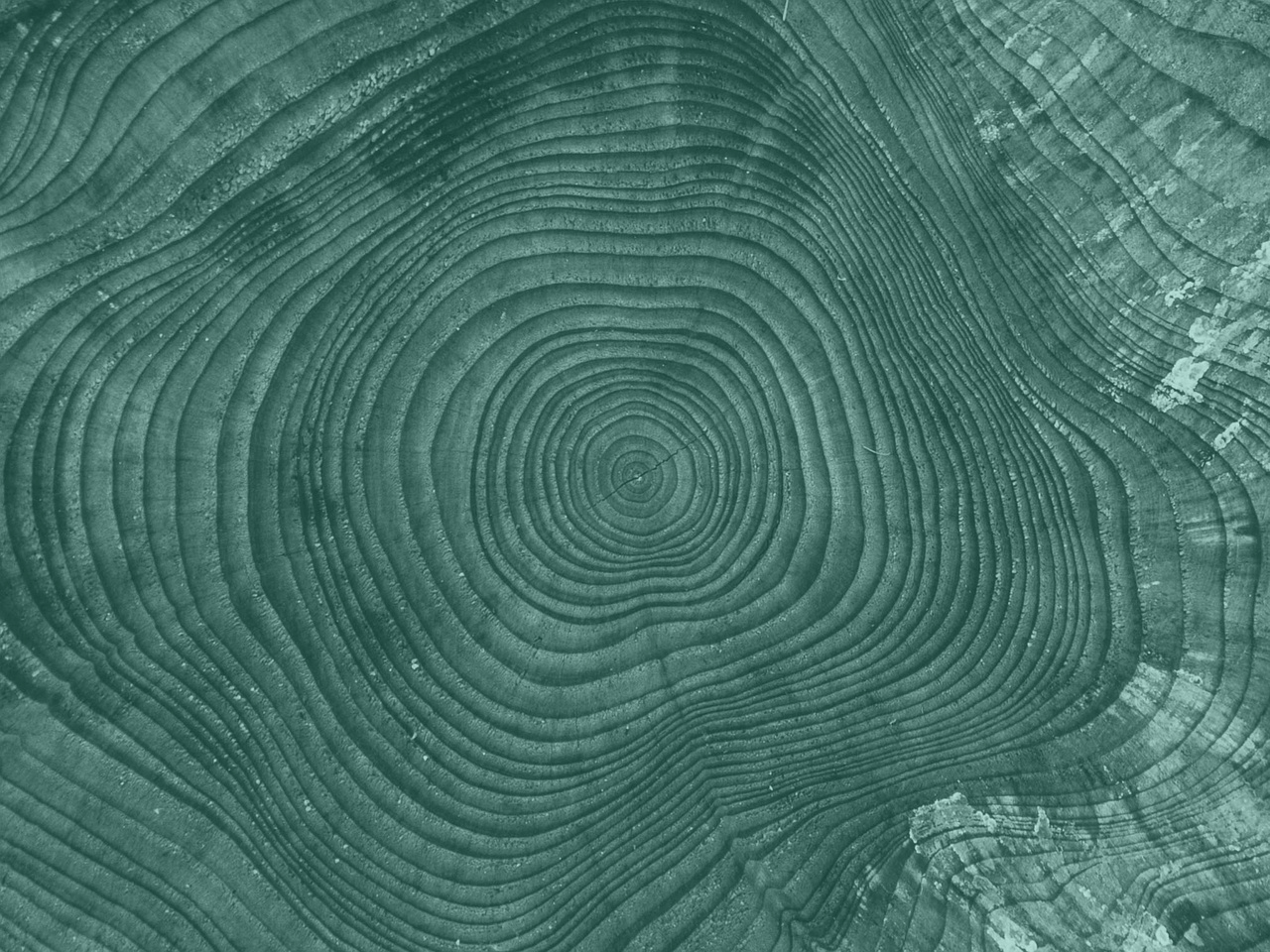 long tree rings