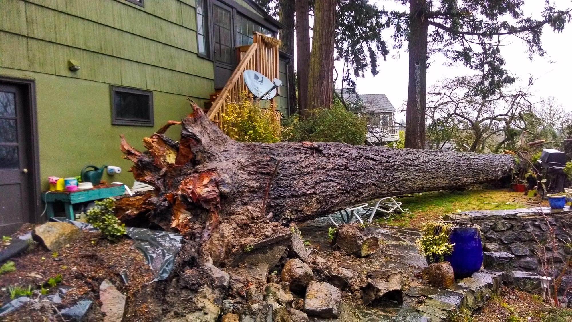 tree-service-removal-pruning-salem-oregon-104