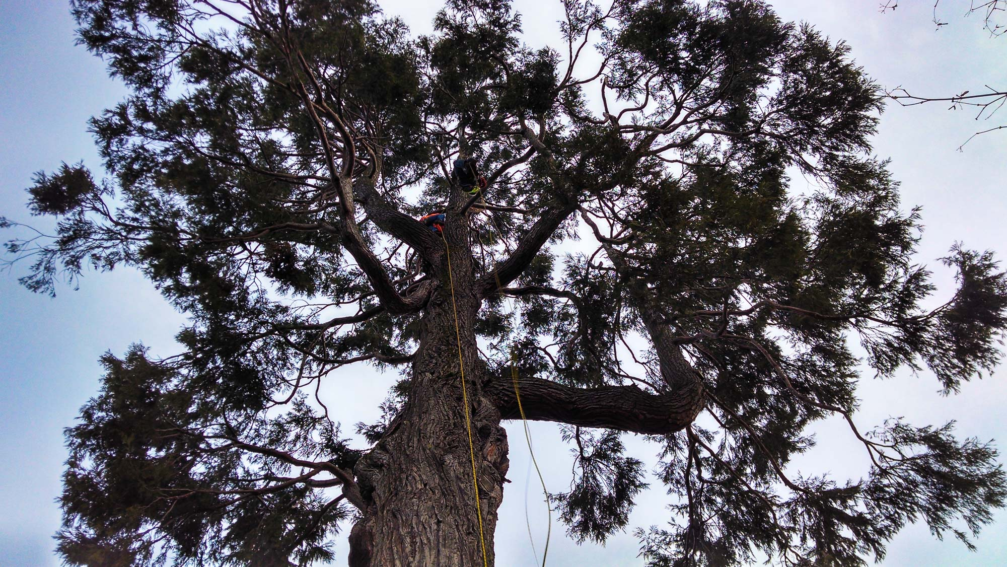 tree-service-removal-pruning-salem-oregon-18