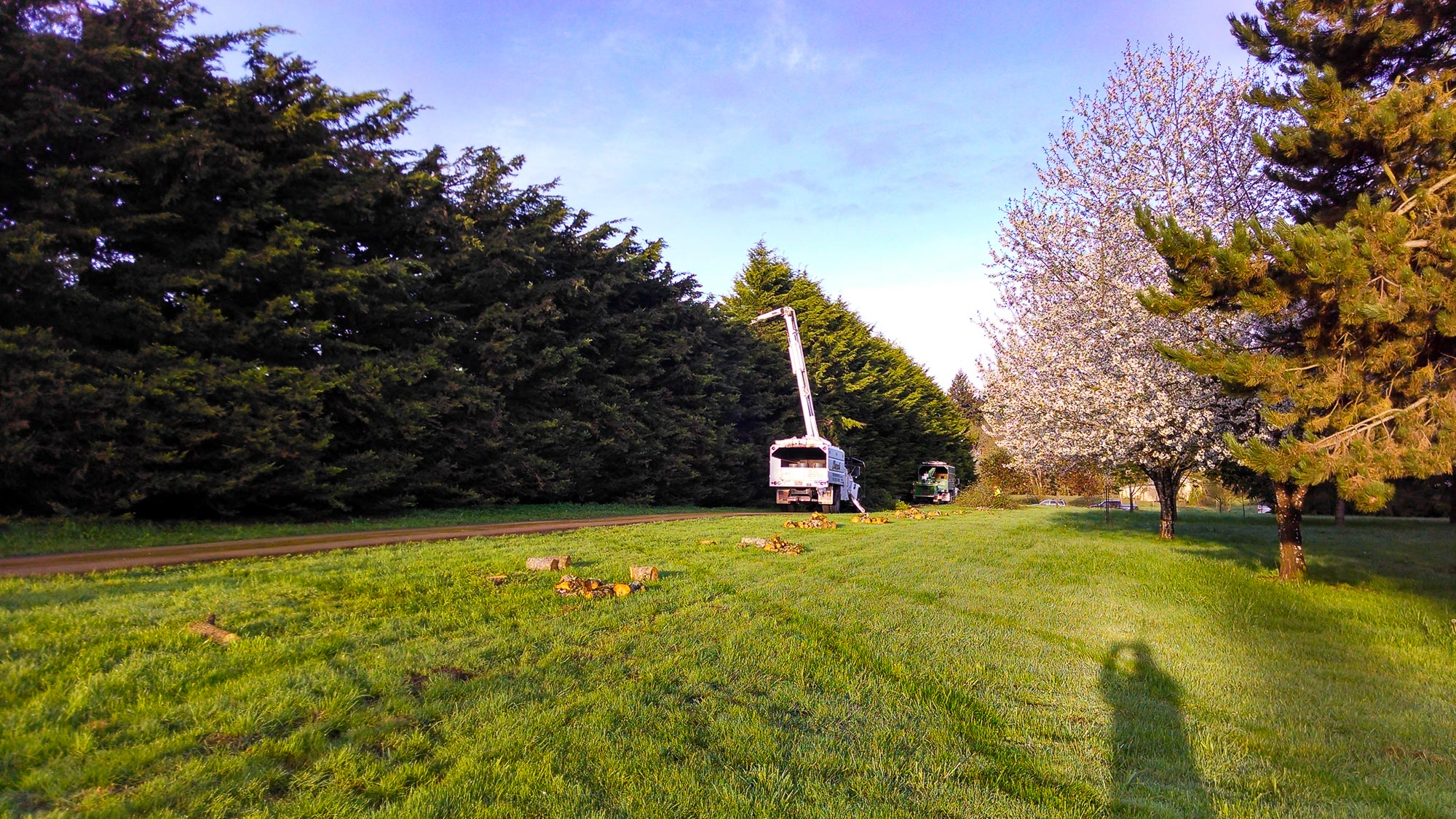 tree-service-removal-pruning-salem-oregon-185