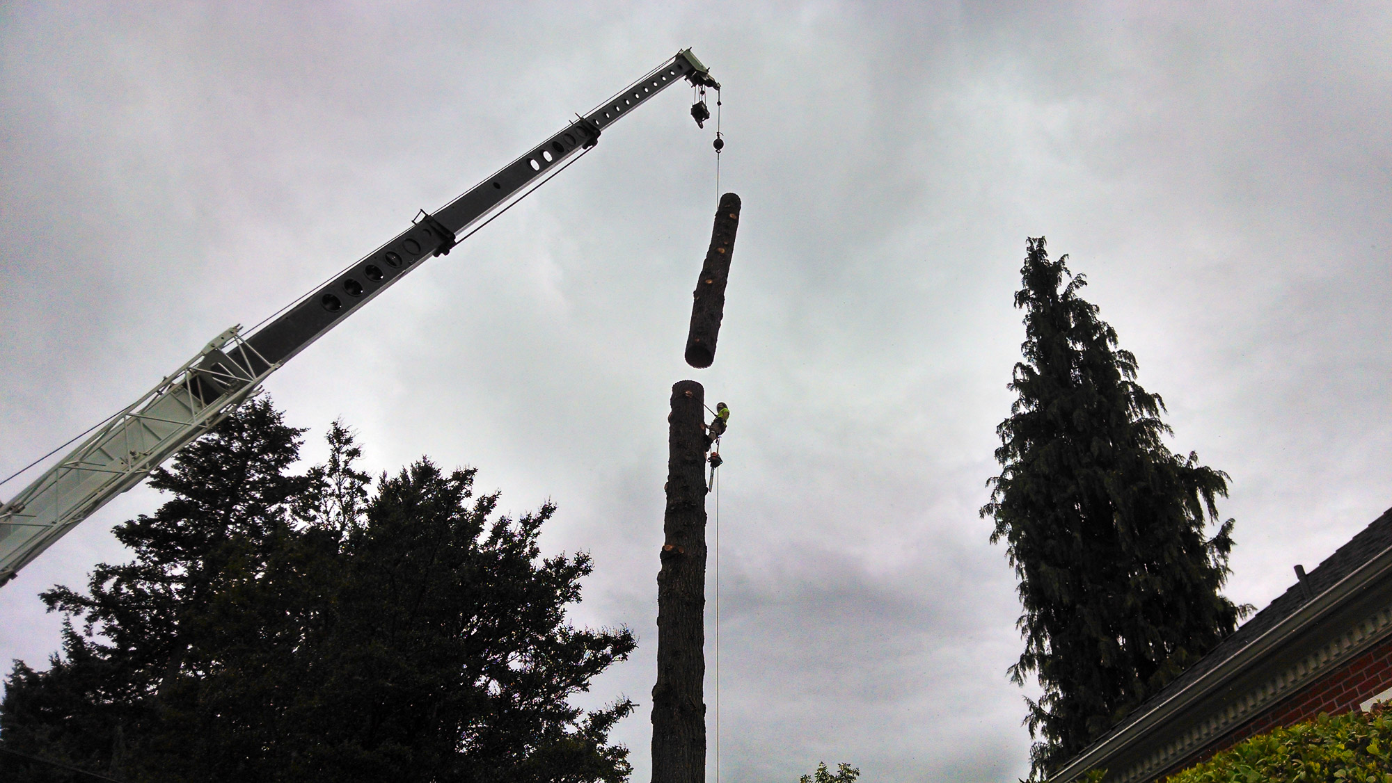 tree-service-removal-pruning-salem-oregon-302