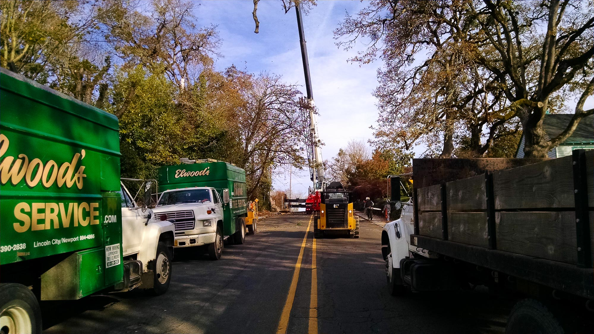 tree-service-removal-pruning-salem-oregon-541