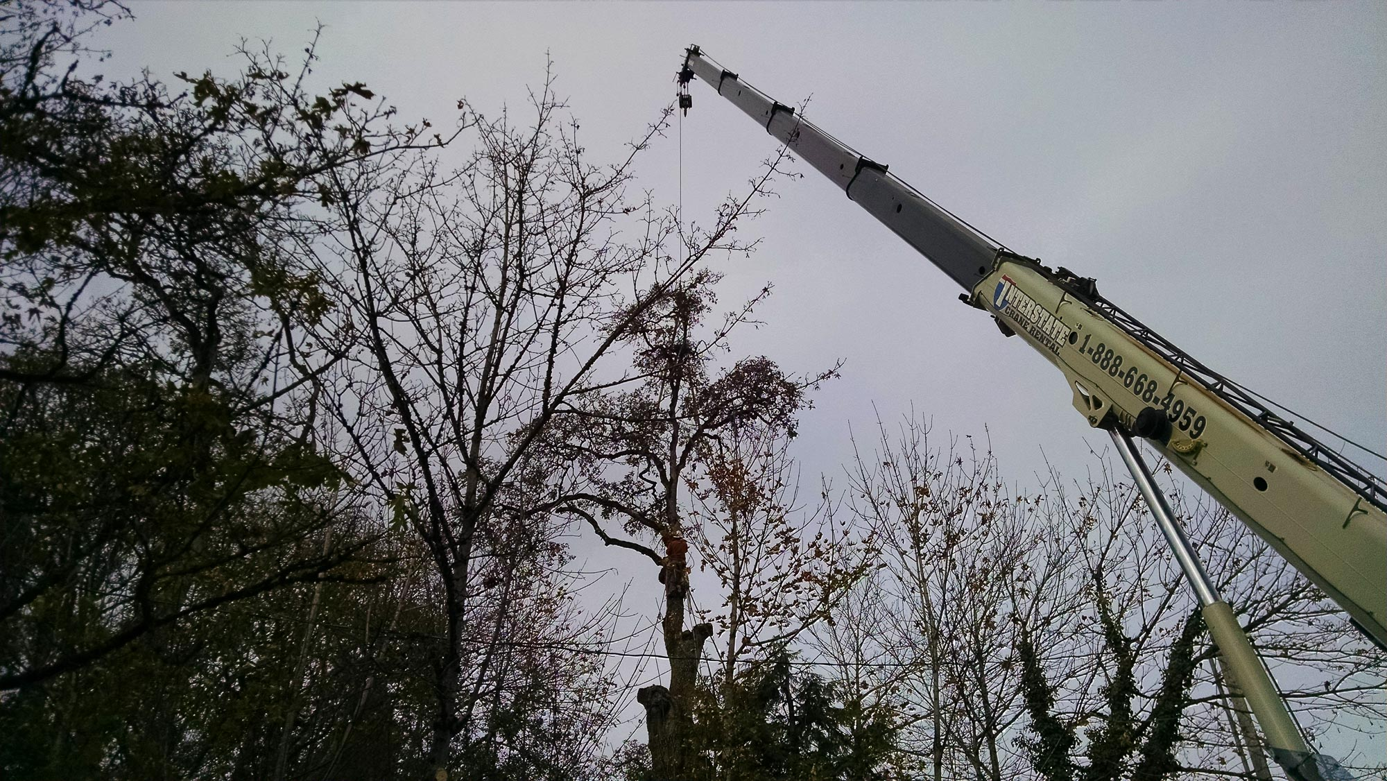 tree-service-removal-pruning-salem-oregon-547