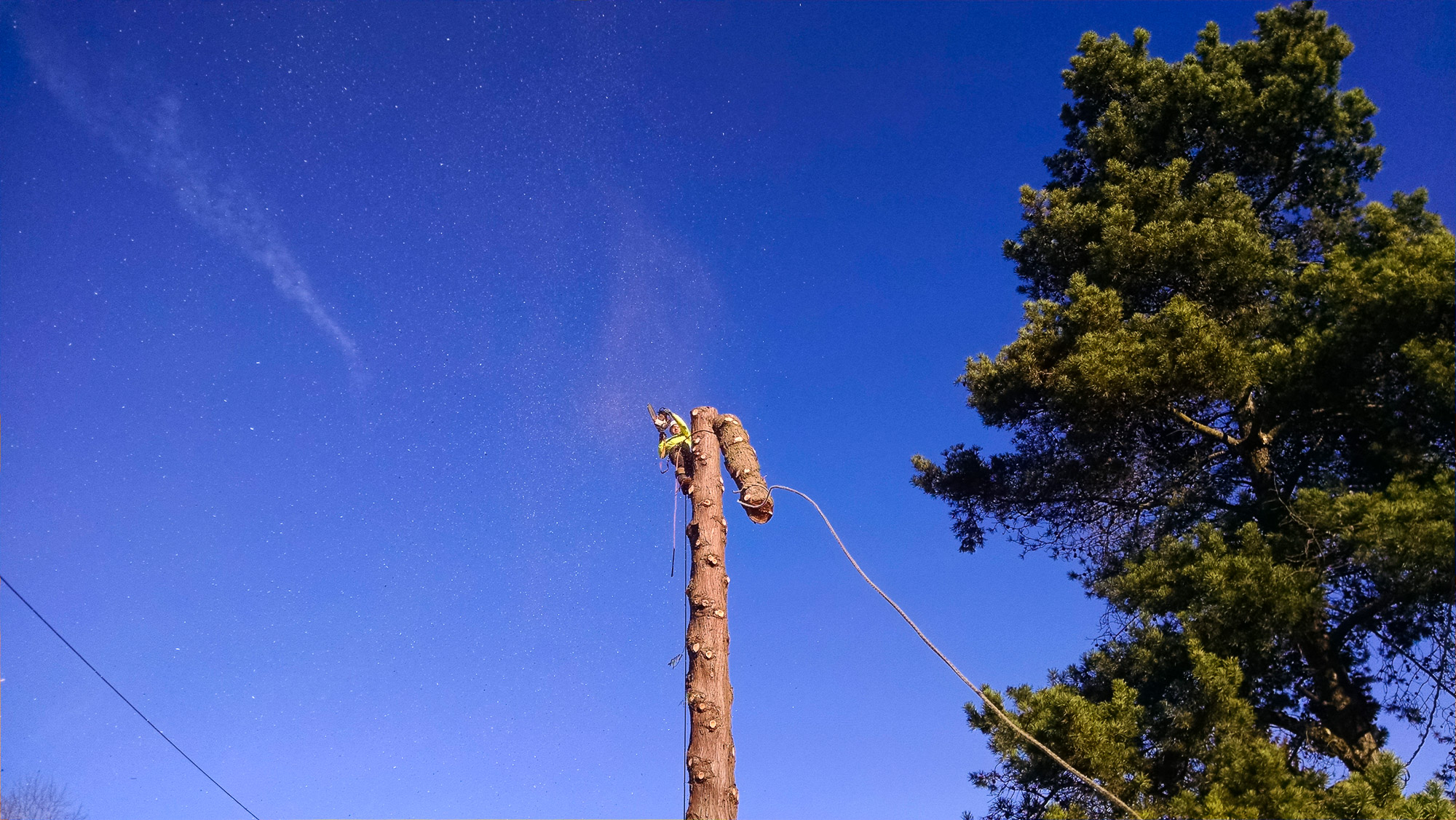 tree-service-removal-pruning-salem-oregon-630