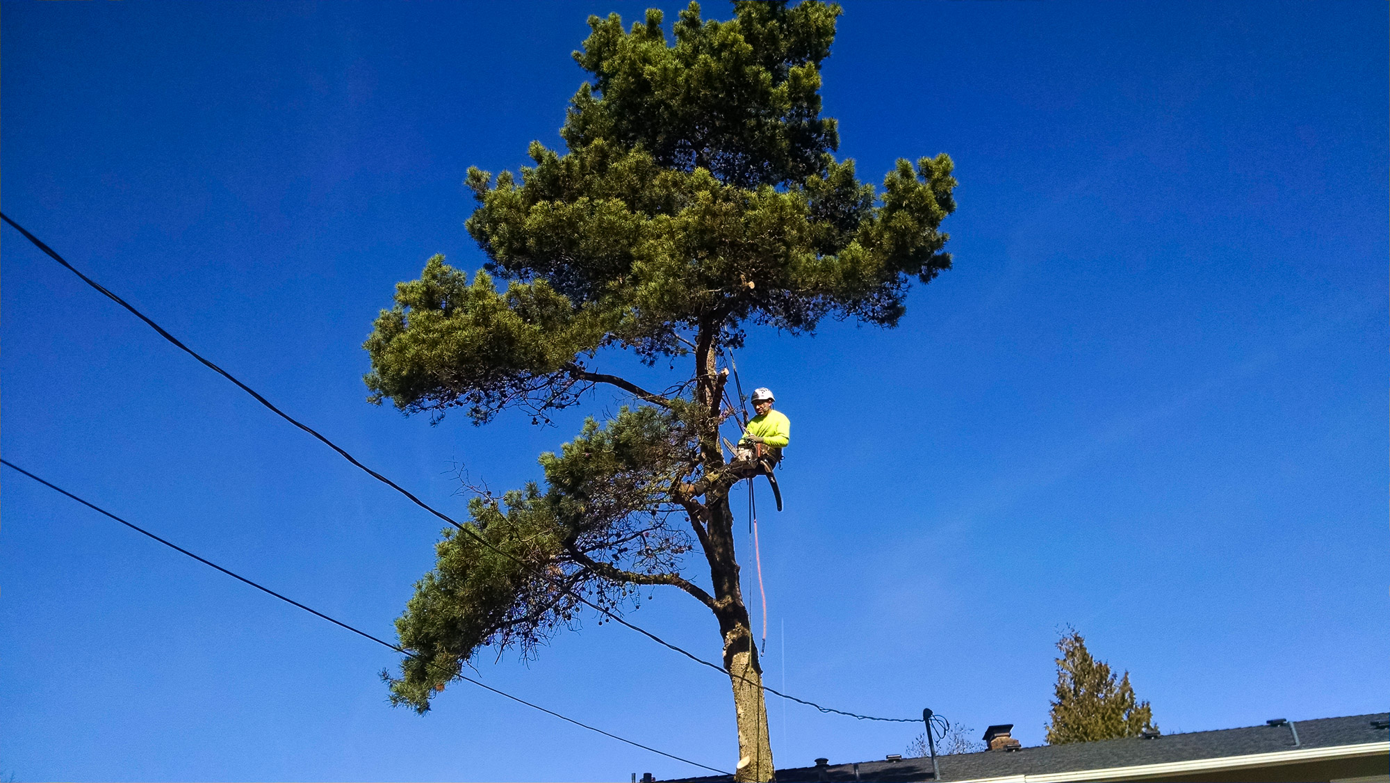 tree-service-removal-pruning-salem-oregon-631