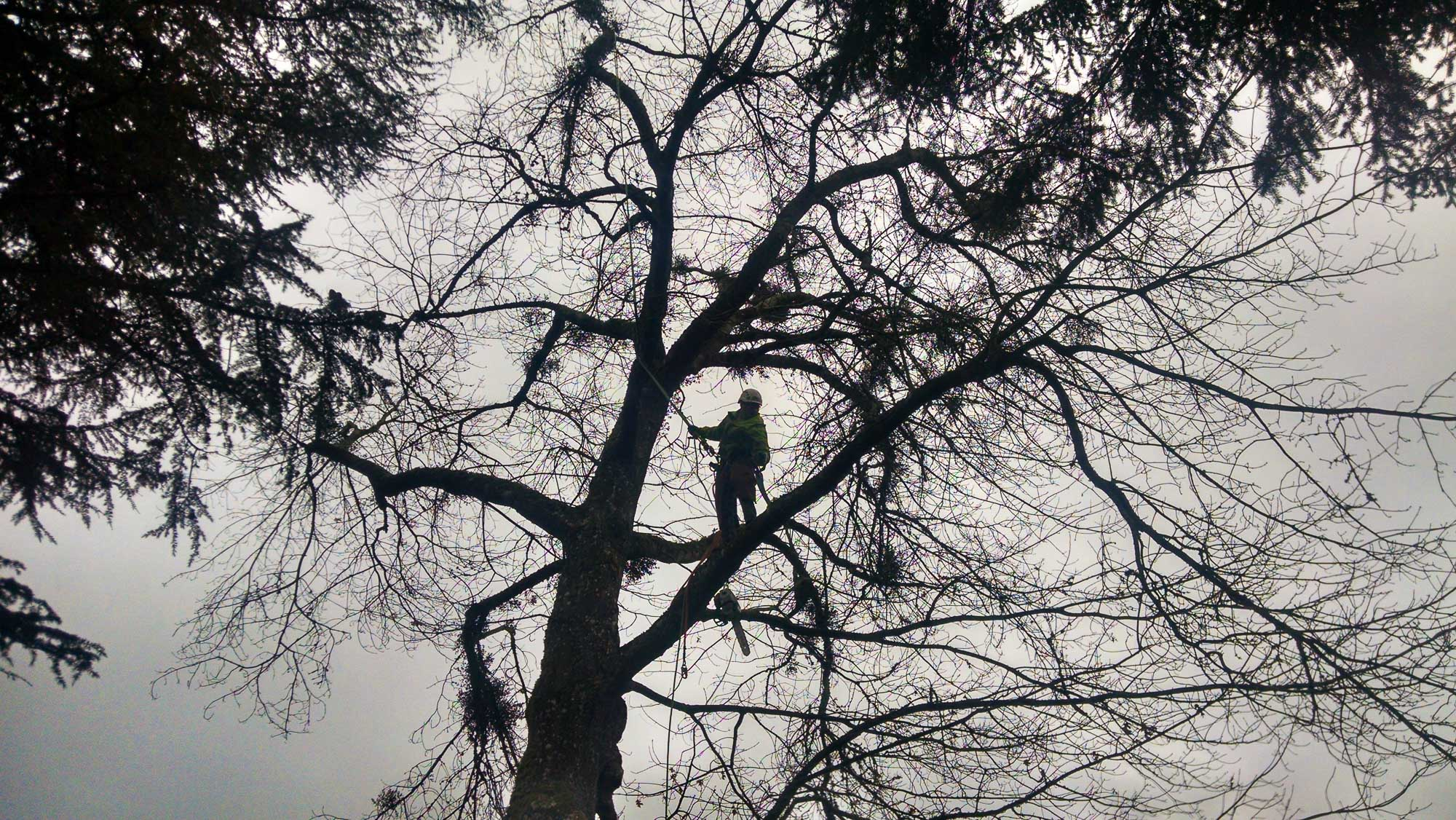 tree-service-removal-pruning-salem-oregon-638
