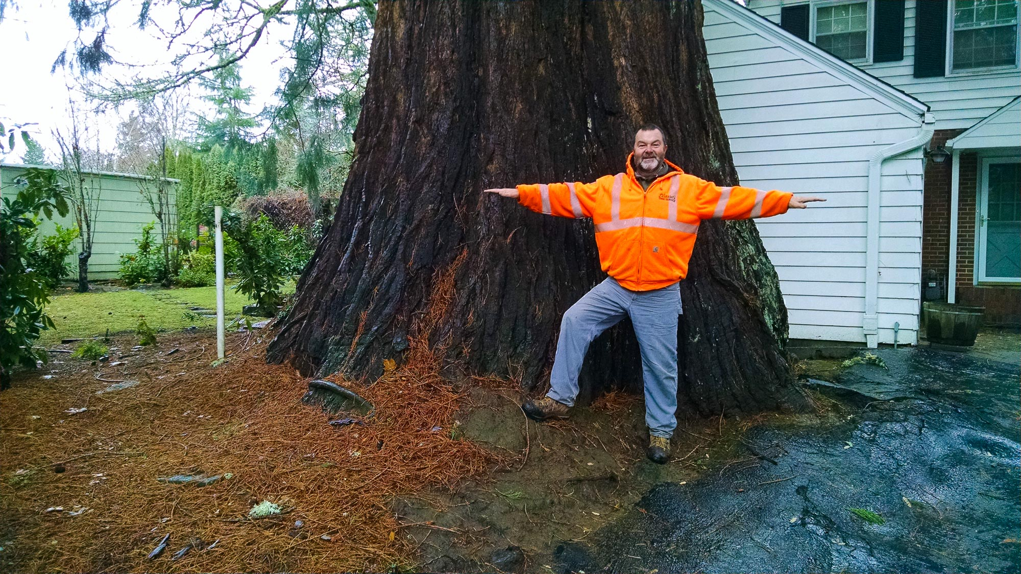 tree-service-removal-pruning-salem-oregon-783