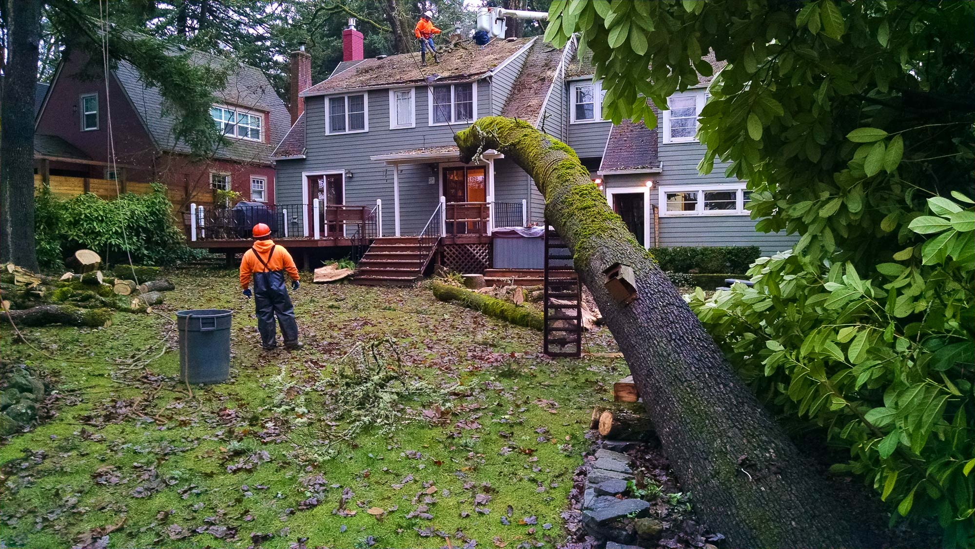 tree-service-removal-pruning-salem-oregon-791