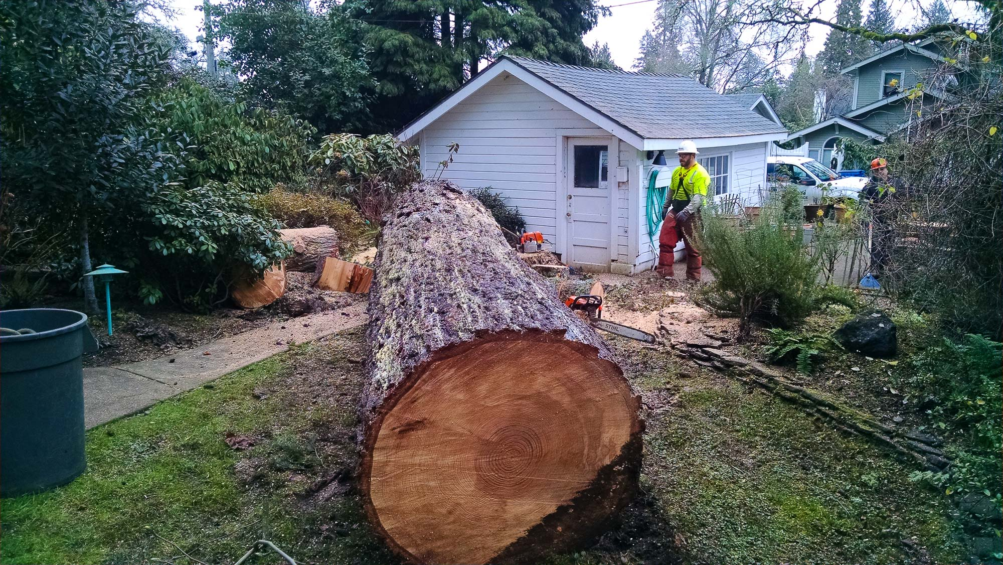 tree-service-removal-pruning-salem-oregon-816