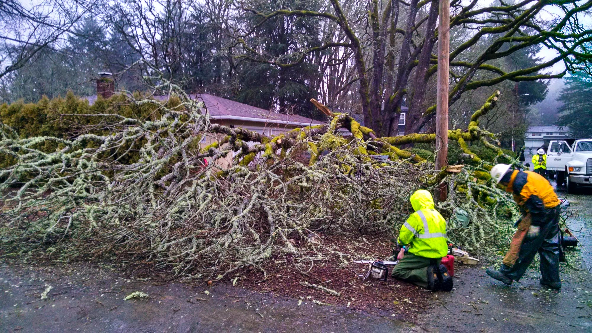 tree-service-removal-pruning-salem-oregon-822