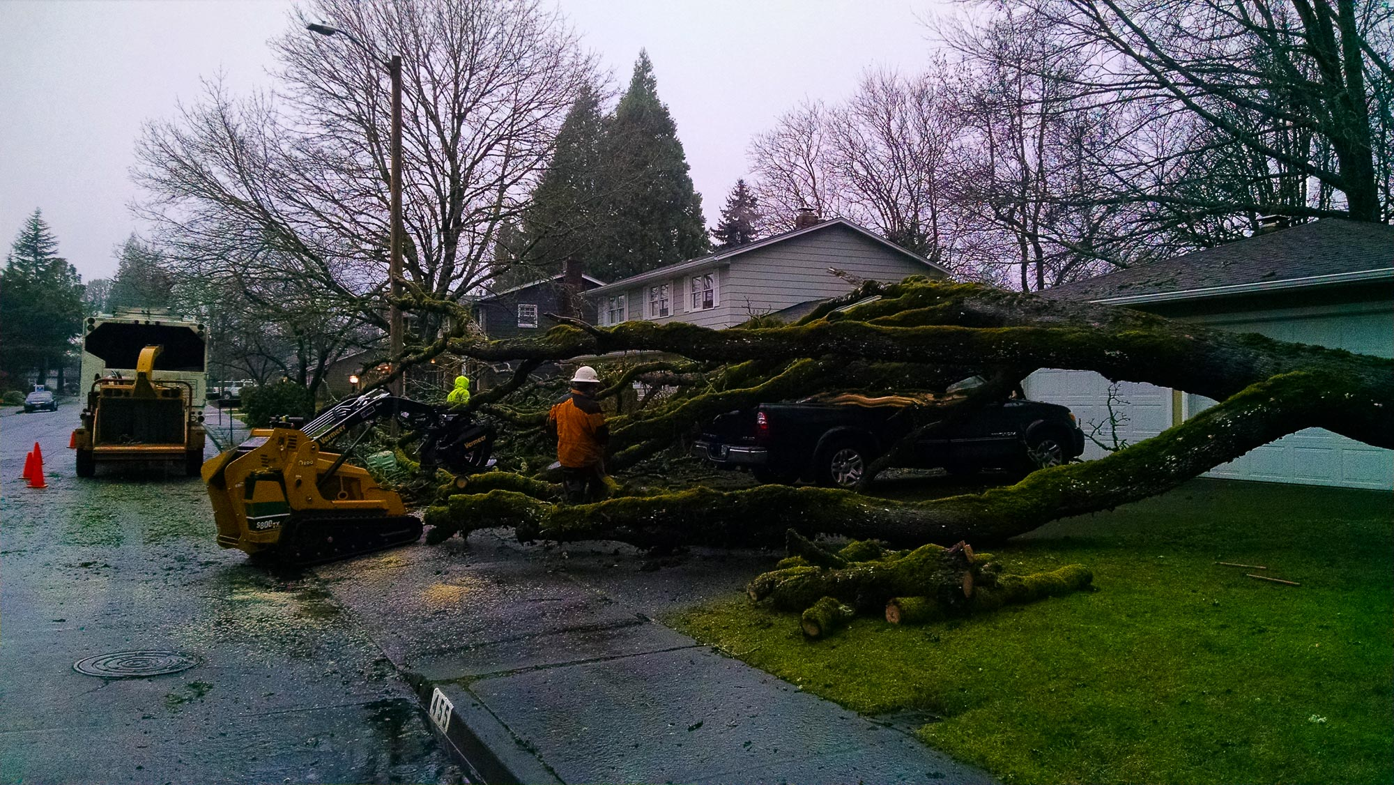 tree-service-removal-pruning-salem-oregon-823