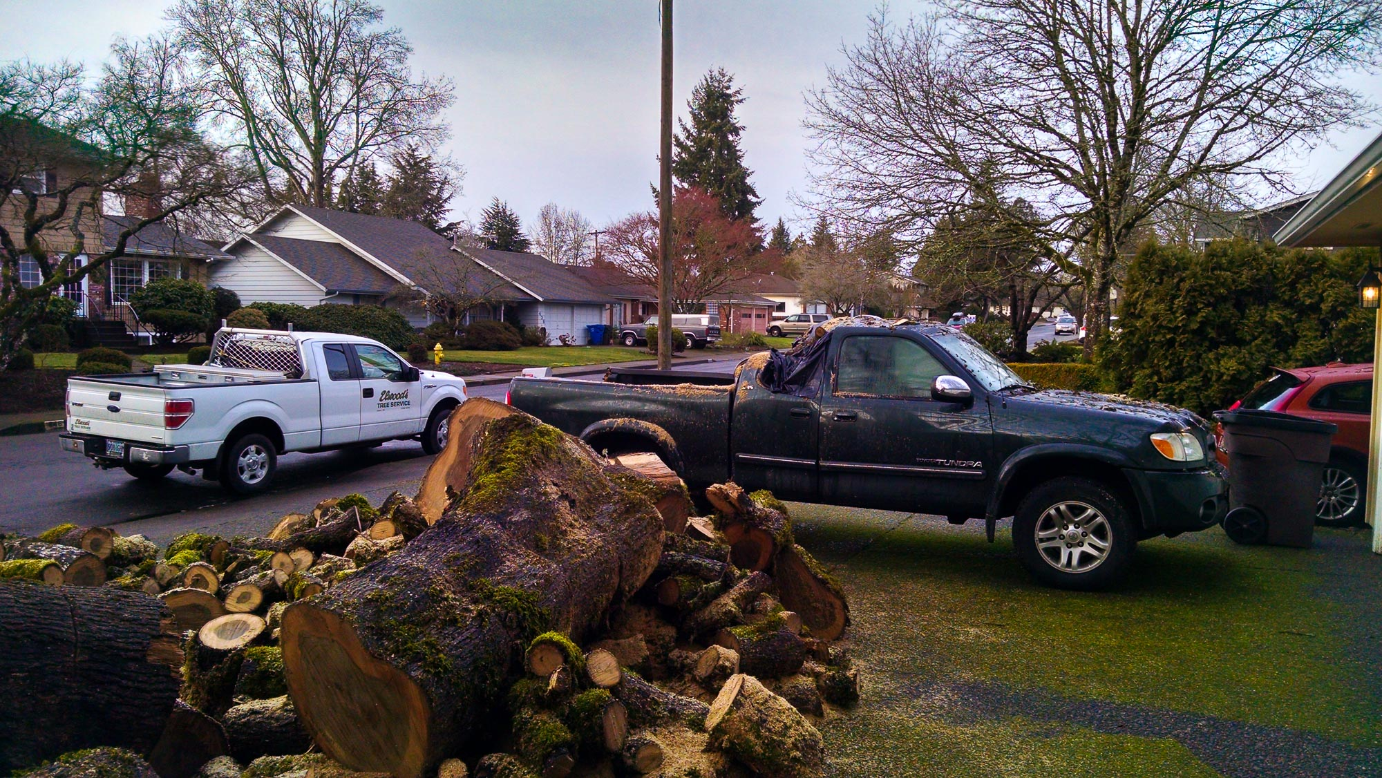 tree-service-removal-pruning-salem-oregon-826