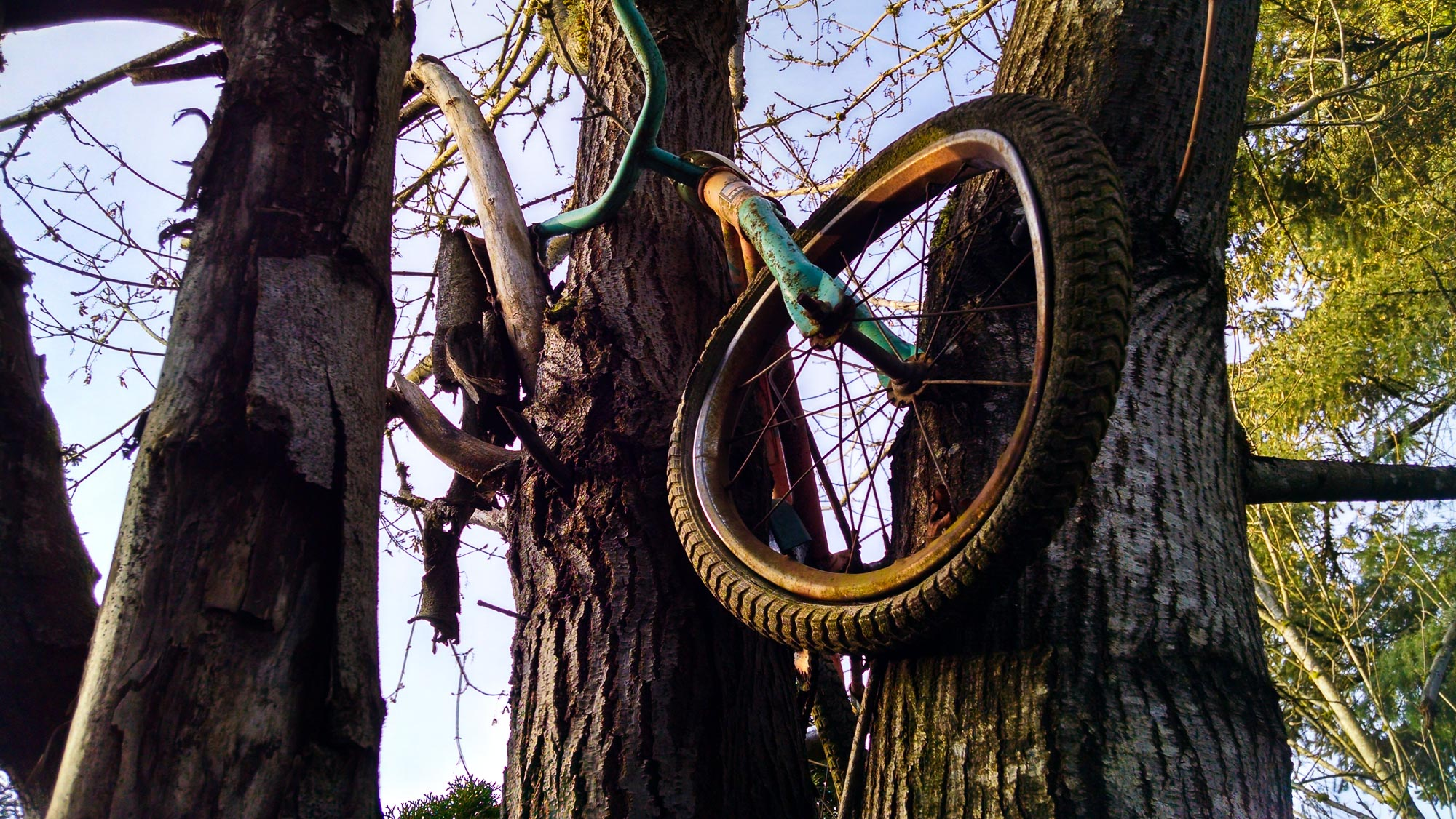 tree-service-removal-pruning-salem-oregon-863