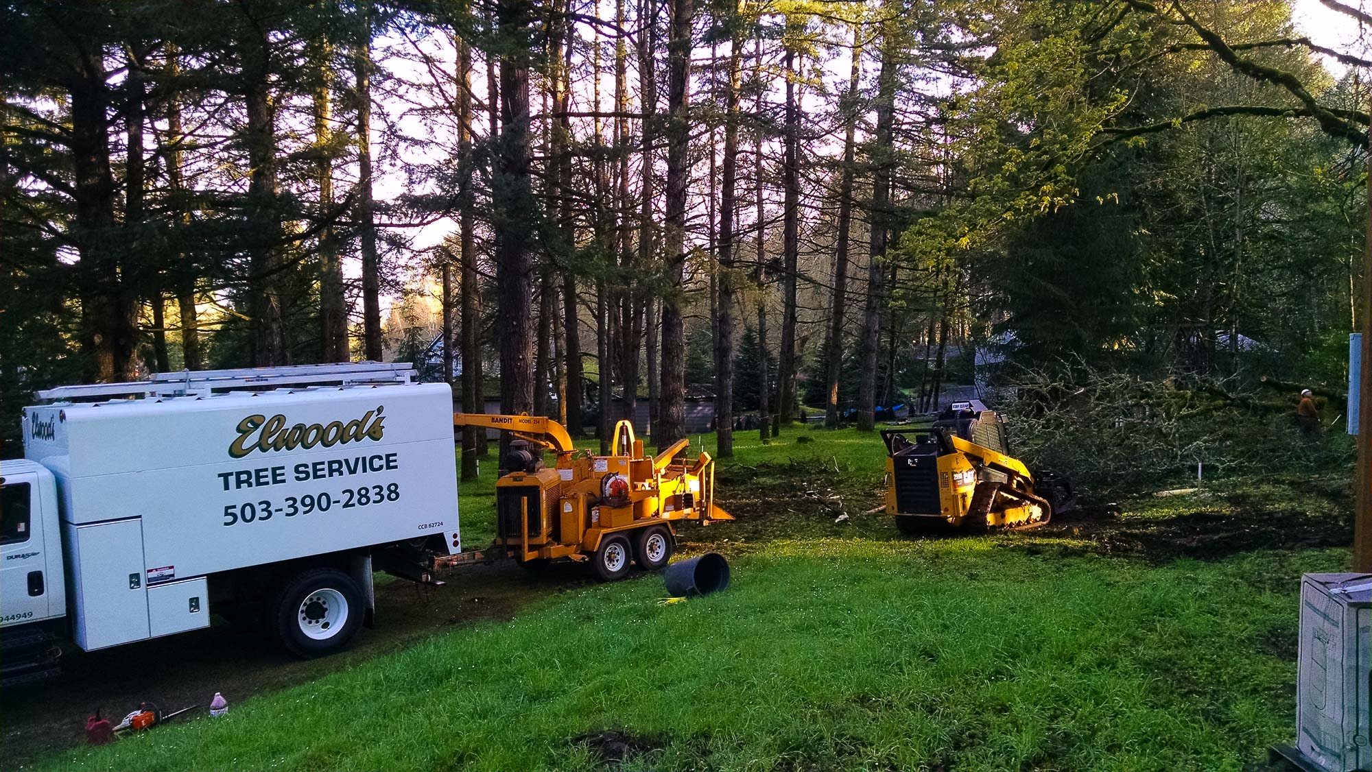 tree-service-removal-pruning-salem-oregon-870