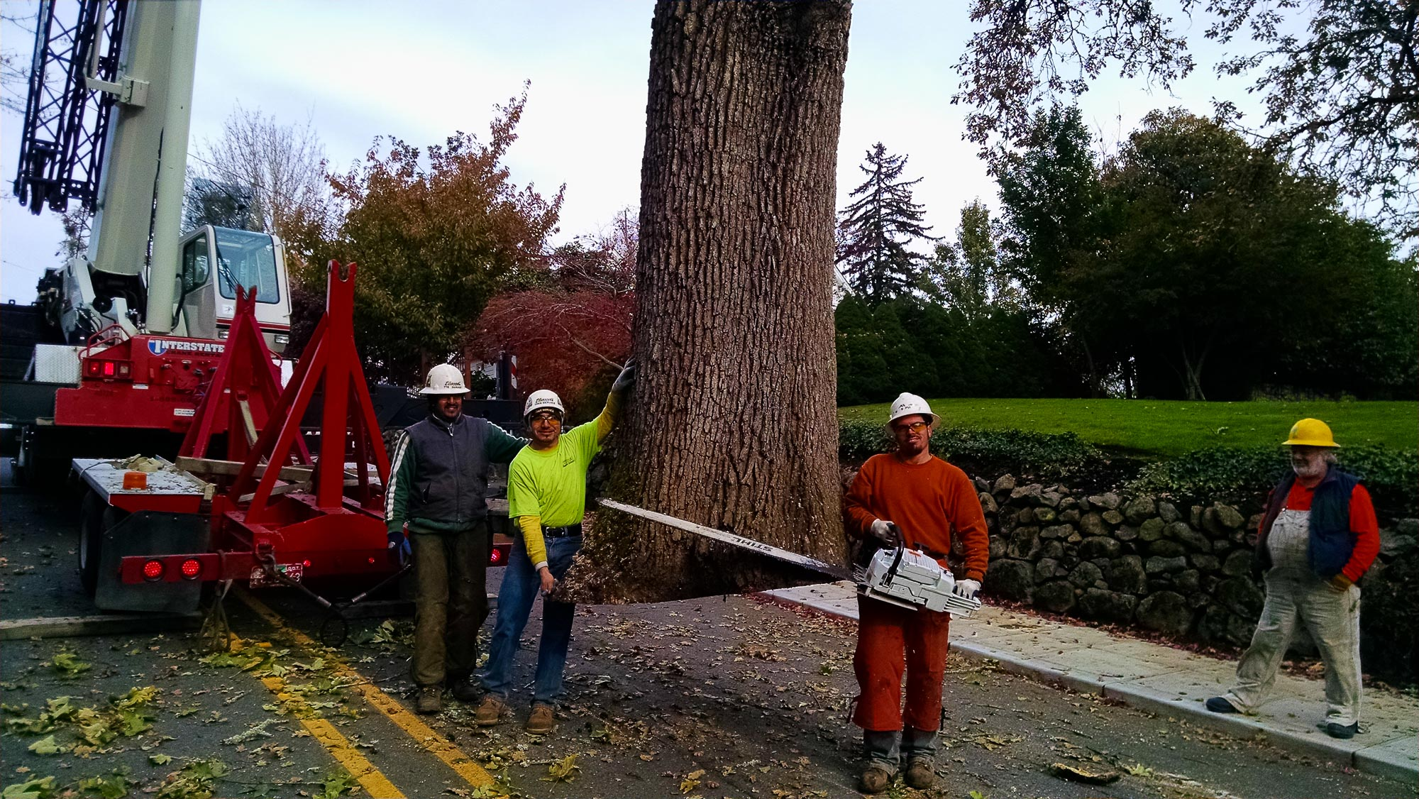 Tree Service Removal Pruning M Oregon 560